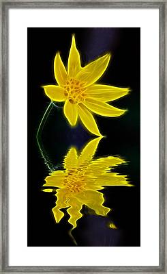 Colorado Wildflower Framed Print by Shane Bechler