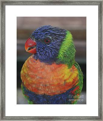 Colored Feathers Framed Print