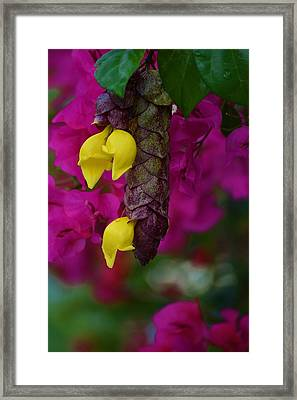 Colorful Abundance Framed Print