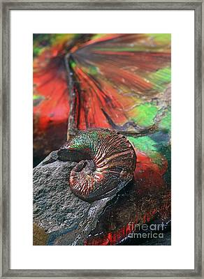 Colorful Ammonite Framed Print