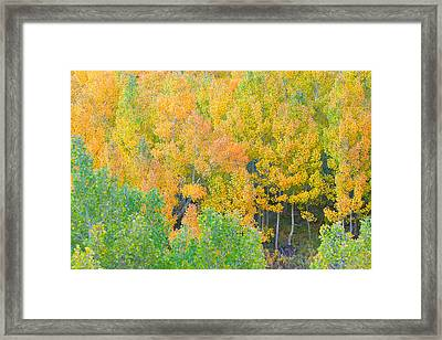Framed Print featuring the photograph Colorful Aspen Forest - Eastern Sierra by Ram Vasudev