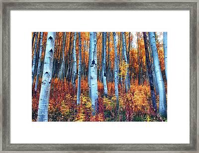 Colorful Aspens Framed Print by Brian Kerls