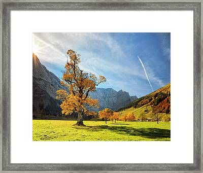 Colorful Autumn At Ahornboden In Framed Print by Dietermeyrl