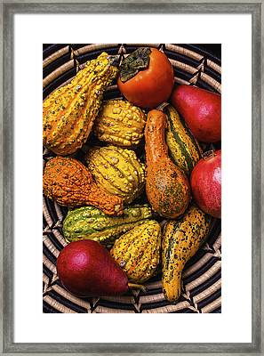 Colorful Autumn Gourds Framed Print