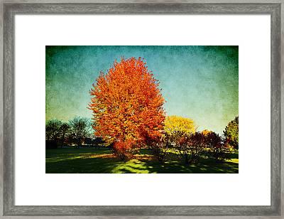 Colorful Autumn Framed Print