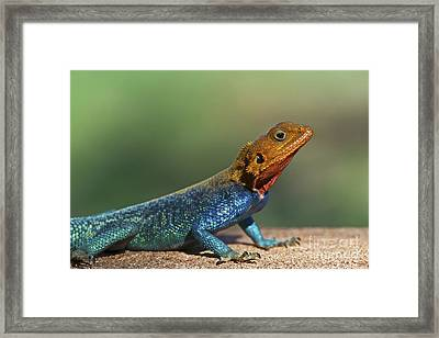 Colorful Awesomeness... Framed Print