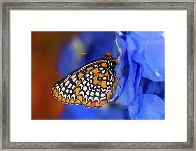 Colorful Baltimore Checkered Spot Framed Print by Darrell Gulin