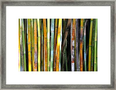 Framed Print featuring the photograph Colorful Bamboo by Jodi Terracina
