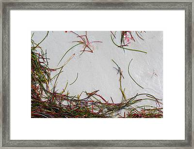 Colorful Beach Grass Framed Print
