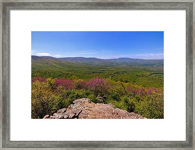 Colorful Blue Ridge Spring Framed Print by Rachel Cohen
