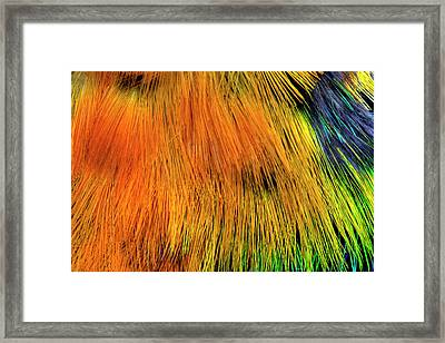 Colorful Breast Feather Pattern Framed Print by Darrell Gulin