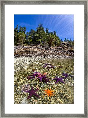 Colorful British Columbia Shoreline  Framed Print by Pierre Leclerc Photography