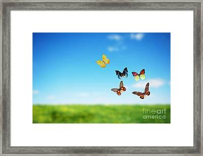 Colorful Buttefly Spring Field Framed Print by Michal Bednarek