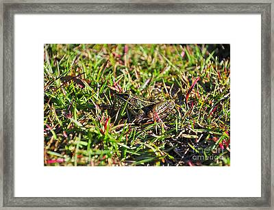 Colorful Camouflage Framed Print by Al Powell Photography USA