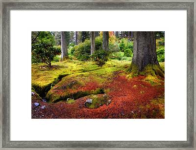 Colorful Carpet Of Moss In Benmore Botanical Garden. Scotland Framed Print by Jenny Rainbow