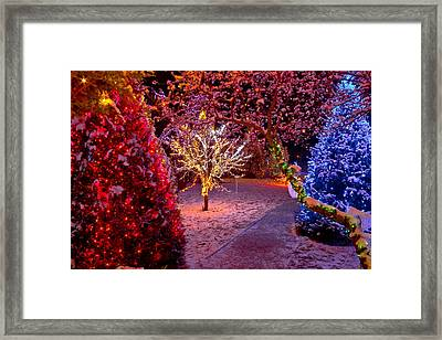 Colorful Christmas Lights On Trees Framed Print by Brch Photography