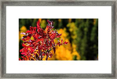 Colorful Colorado Framed Print by Silke Brubaker