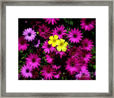 Colorful Contrast Framed Print by Patrick Witz