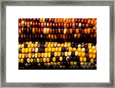 Colorful Corn Framed Print by James BO  Insogna