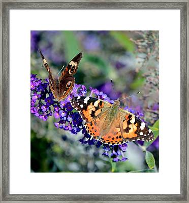 Colorful Cousins Framed Print by Deena Stoddard
