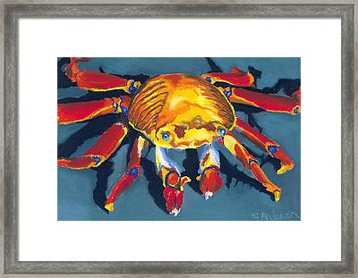 Colorful Crab Framed Print by Stephen Anderson