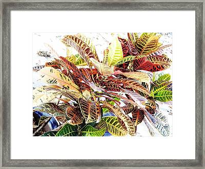 Colorful - Croton - Plant Framed Print