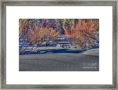 Colorful Despite Snow Framed Print