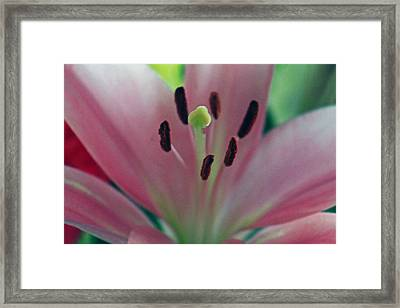 Colorful Detailed Framed Print