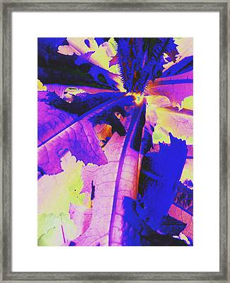 Framed Print featuring the photograph Colorful Disguise  by Diane Miller