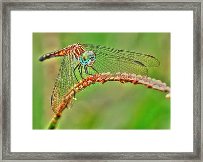 Colorful Dragonfly Framed Print