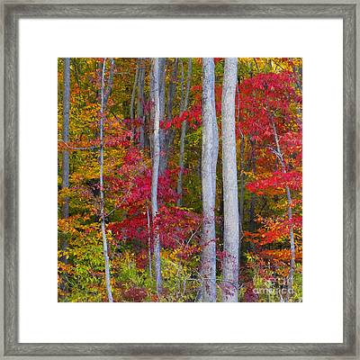 Colorful Fall Forest Framed Print by Scott Cameron