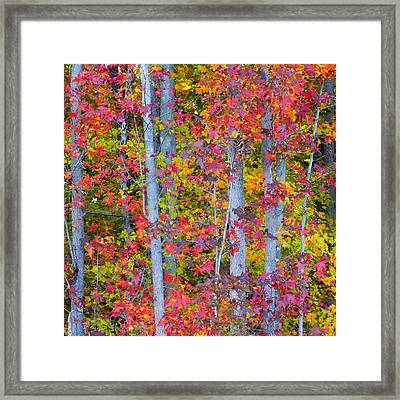Colorful Fall Leaves Framed Print by Scott Cameron