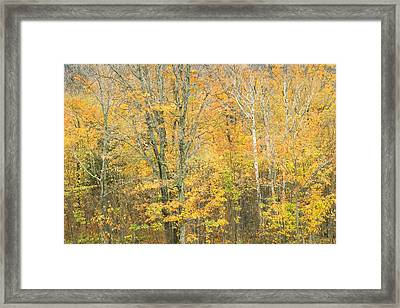 Colorful Fall Trees In Maine Framed Print by Keith Webber Jr