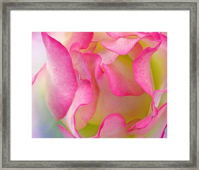 Colorful Flower Abstract #1 - Close Up Flowers Fine Art Photography Framed Print