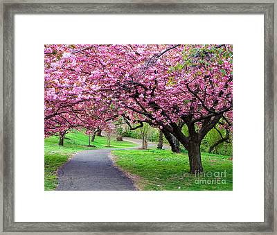 Colorful  Flower Tree Vivid Framed Print by Boon Mee