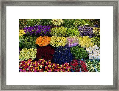 Colorful Flowers Background Framed Print by Michal Bednarek