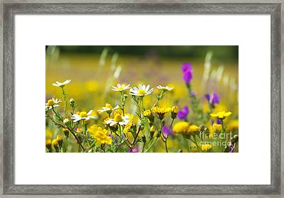 Colorful Flowers Framed Print by Boon Mee