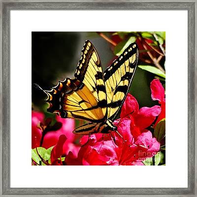 Colorful Flying Garden Framed Print by Nava Thompson
