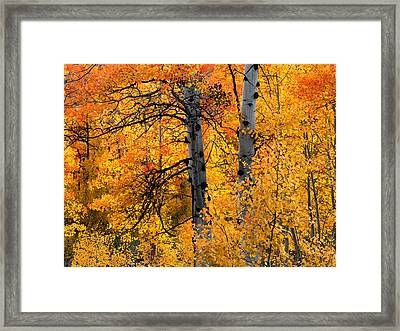 Colorful Glow Framed Print by Leland D Howard