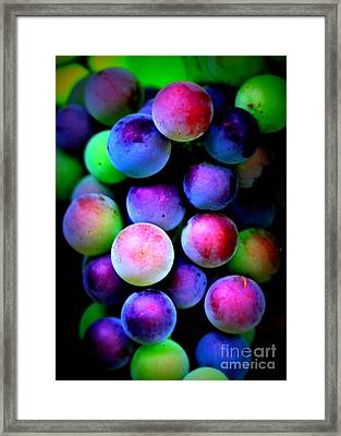 Colorful Grapes - Digital Art Framed Print by Carol Groenen