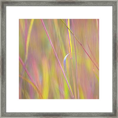 Colorful Grasses At The Tall Grass Framed Print by Dennis Fast / Vwpics