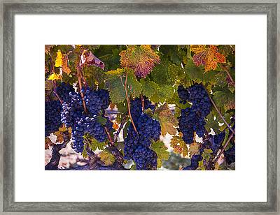 Colorful Harvest Framed Print by Garry Gay