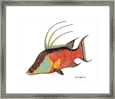 Colorful Hogfish Framed Print