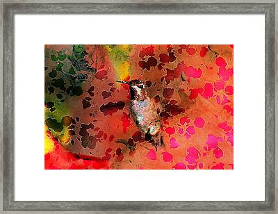 Colorful Hummingbird Framed Print