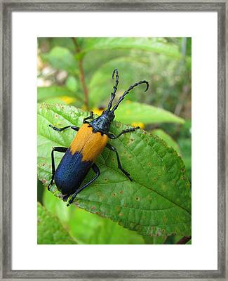 Colorful Insect Framed Print by Selma Glunn