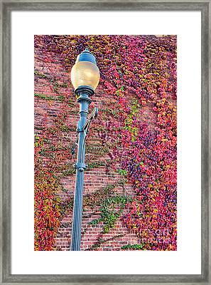 Colorful Ivy And Lamppost I Framed Print by Dan Carmichael