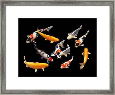 Colorful Japanese Koi Horizontal Framed Print by Gill Billington