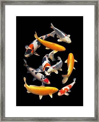 Colorful Japanese Koi Vertical Framed Print by Gill Billington