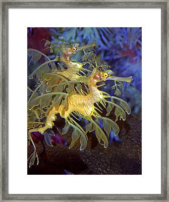 Colorful Leafy Sea Dragons Framed Print
