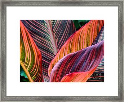 Colorful Leaves Framed Print